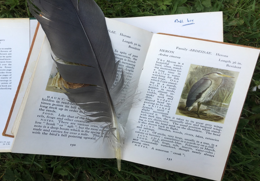Book of Birds by Nicola Chester for Birds of Firle