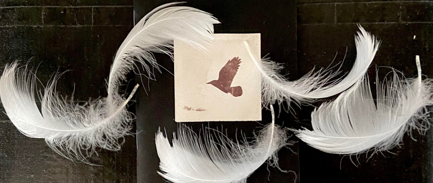Swan feathers by Jean Wilson for Birds of Firle